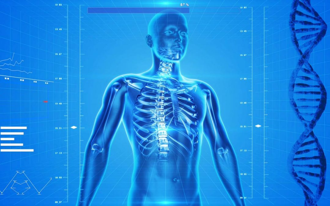 The Physical Body – A Biological Computer